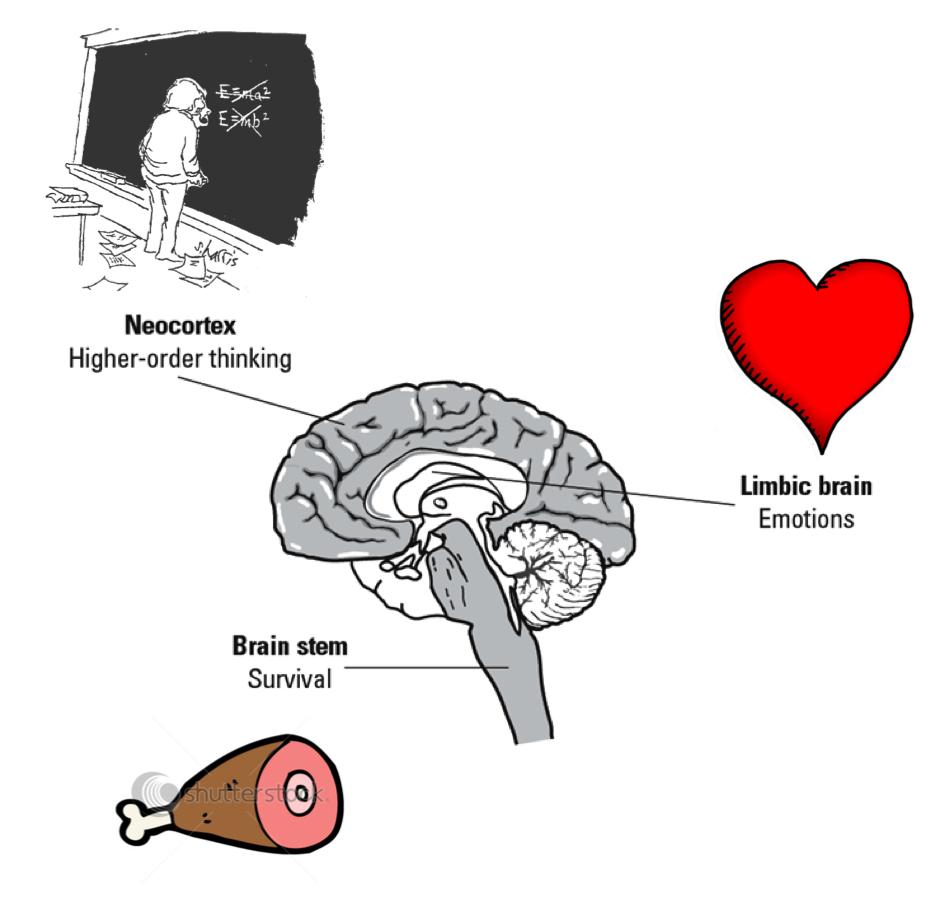 Neocortex: Neocortex Brain